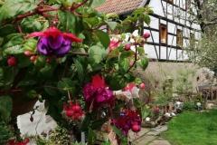Bilder-vom-Appenhof-001